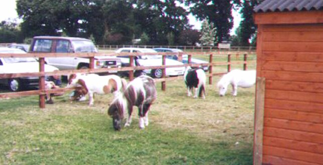 rescued horses at redwings